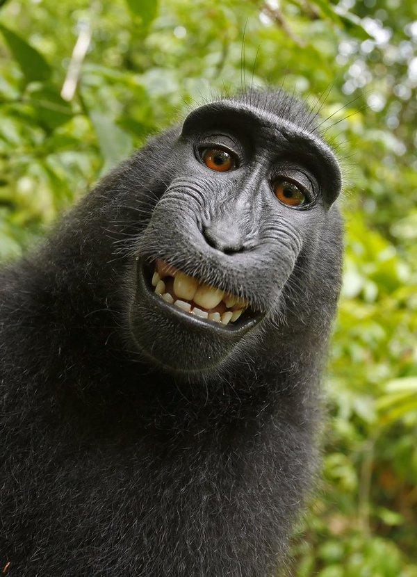 monkey-selfie-photography-by-david-slater