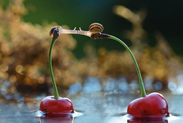 snails-kiss-on-cherries-photography-by-vyacheslav-mishchenko