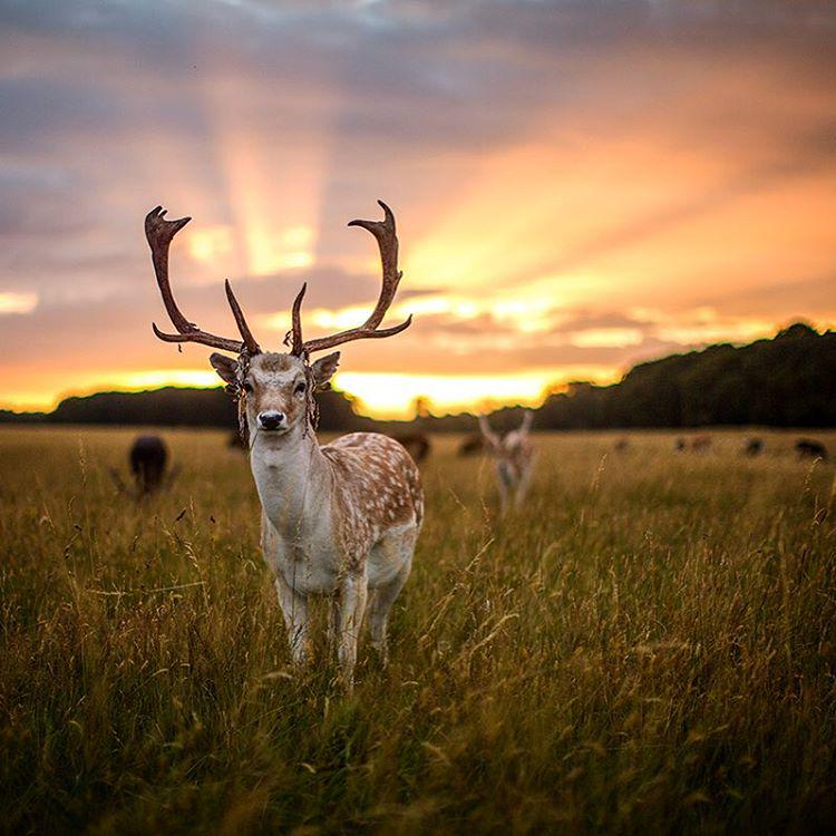 sunset-in-phoenix-park-dublin-photography-by-danka-lochowicz