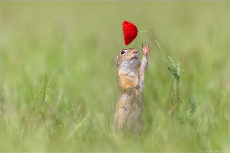 trying-to-pick-a-flower-photography-by-henrik-spranz